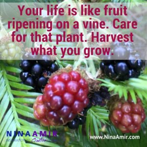 Create Inspired Results: Ripen