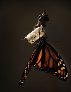 transfrom yourself like a butterfly